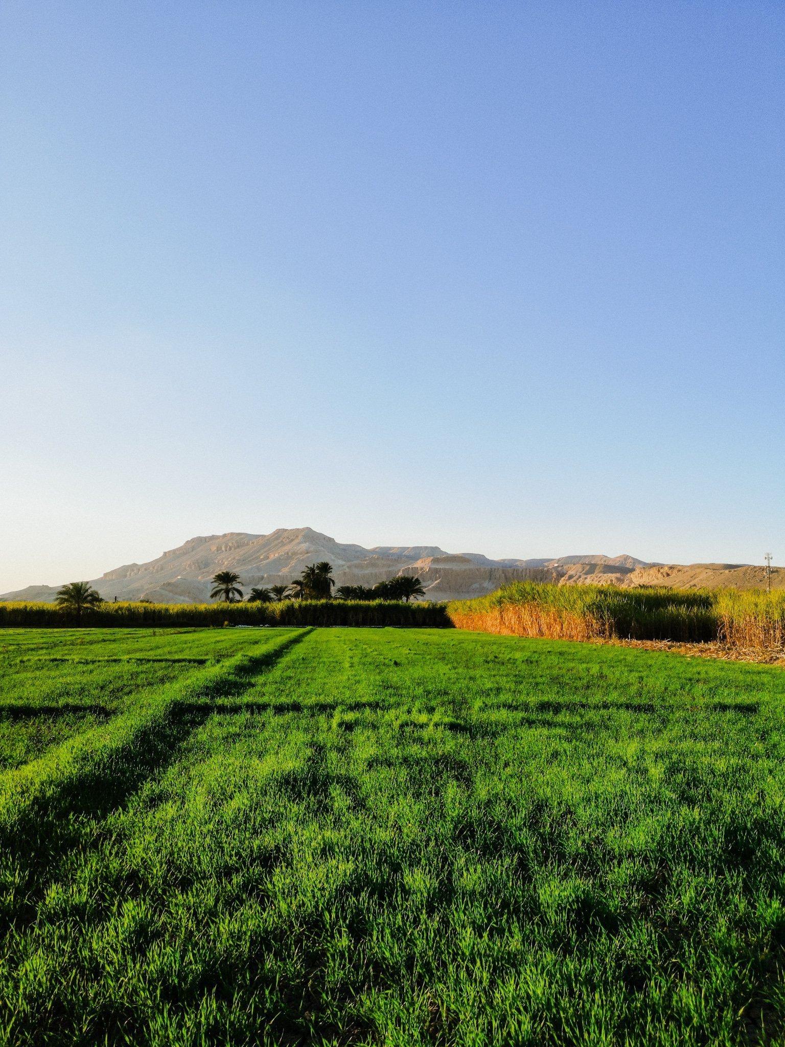 Fields in Luxor