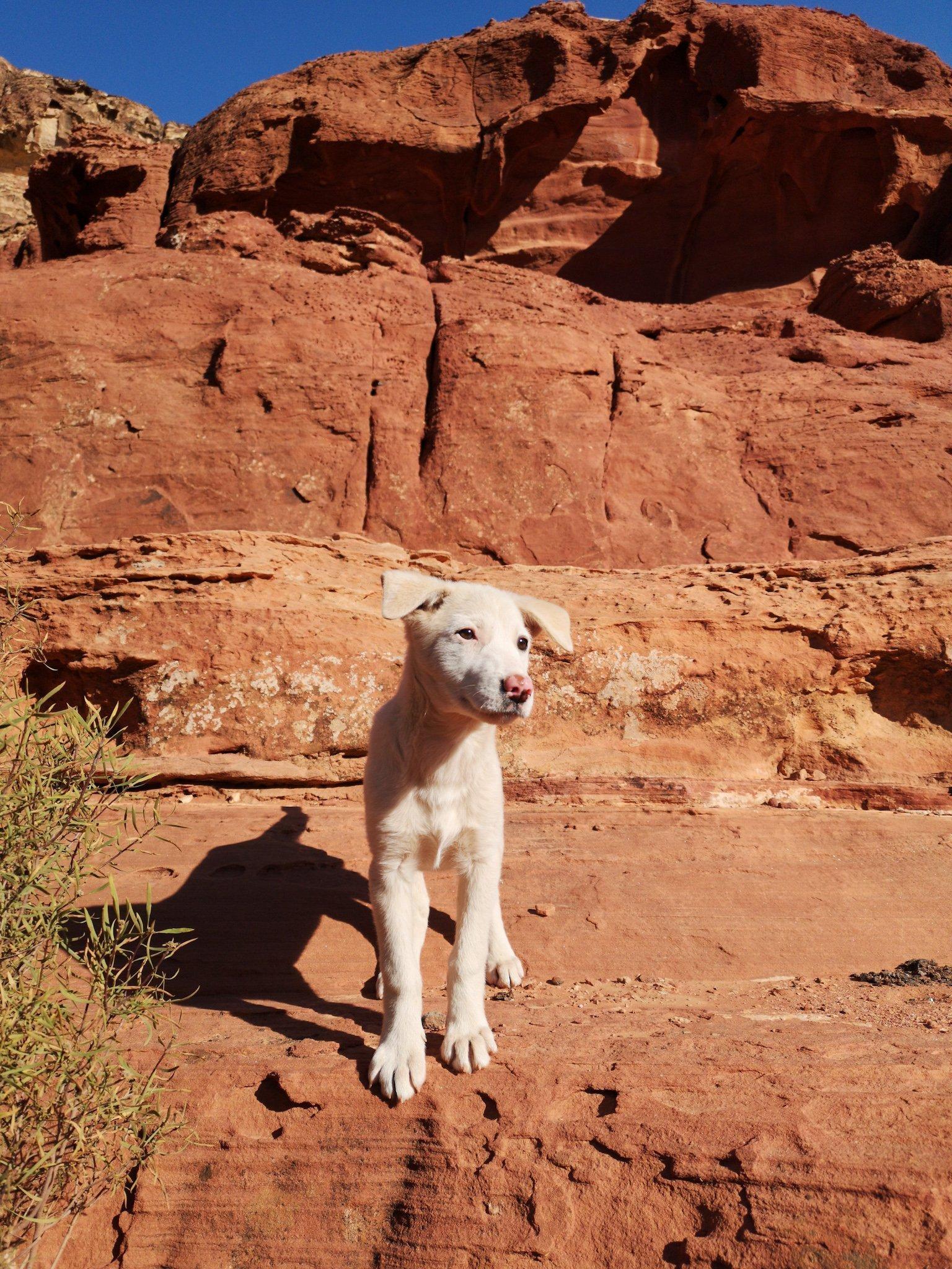 Petra Puppy
