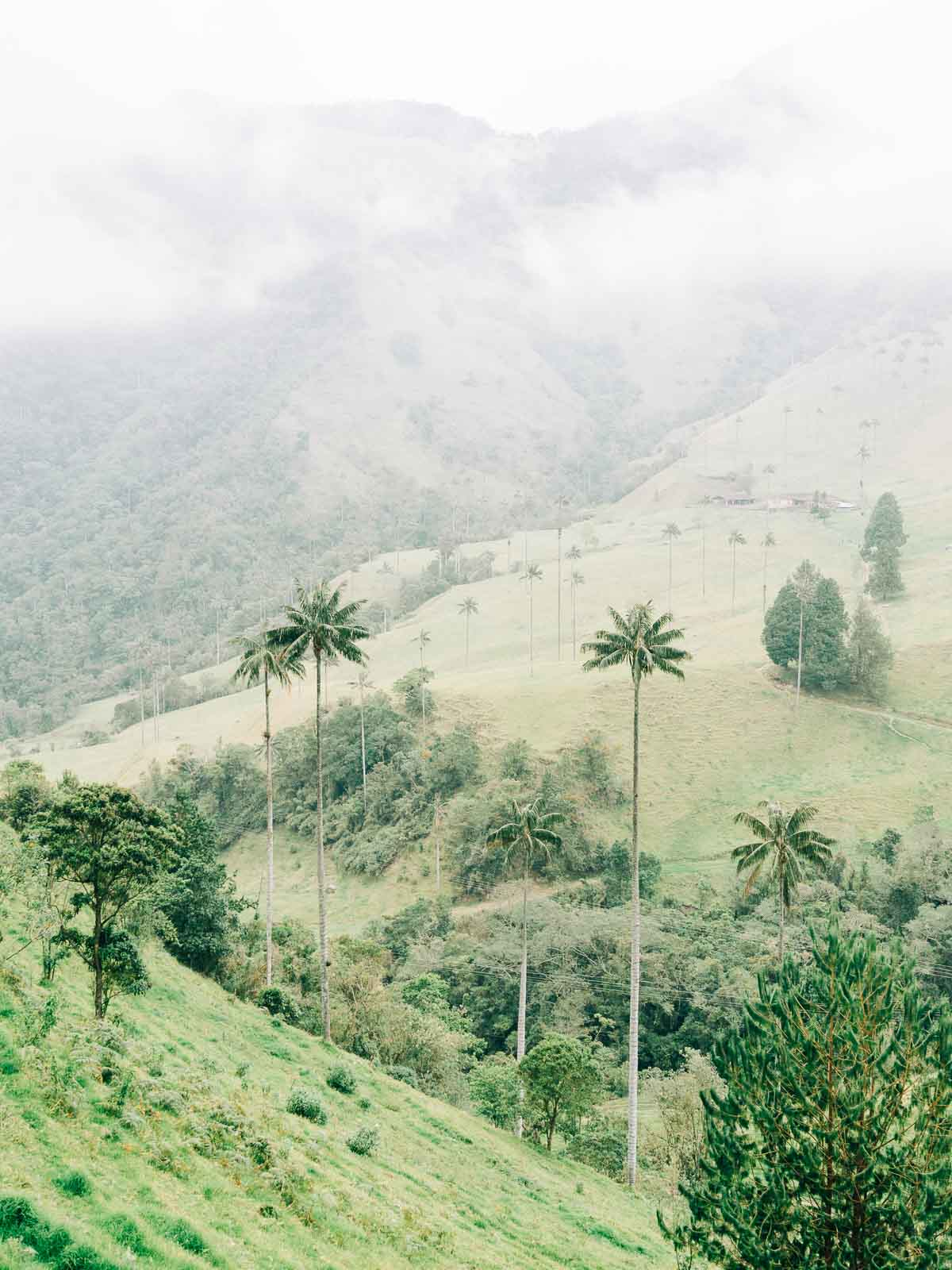 Cocora Valley Hiking Guide with Trail Map and 2020 Prices