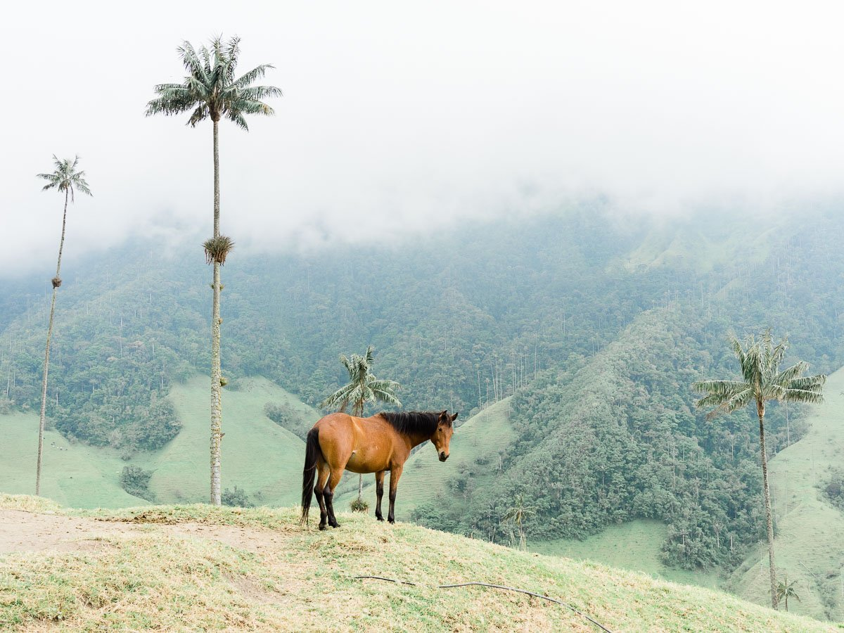 Cocora Valley Horses