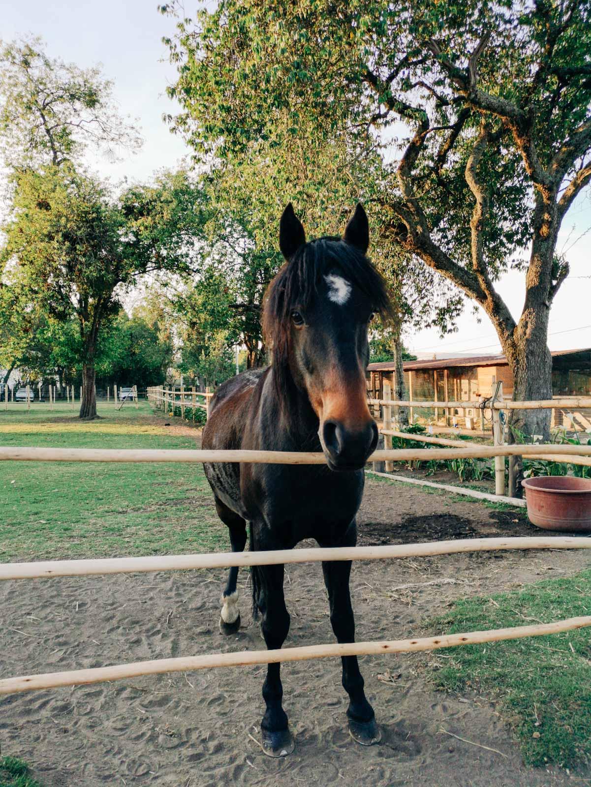 Horses at Hosteria Papagayo